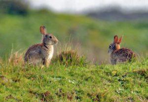 konijnen begraafplaatsen Nieuw Vennep, Hillegom, Hoofddorp, Aalsmeer, Lisse, Sassenheim, Bennebroek, Heemstede, Noordwijkerhout