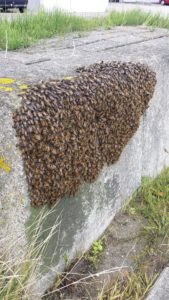 wespenbestrijding Nieuw-Vennep, wespenbestrijding Hillegom, wespenbestrijding Lisse, wespenbestrijding Hoofddorp